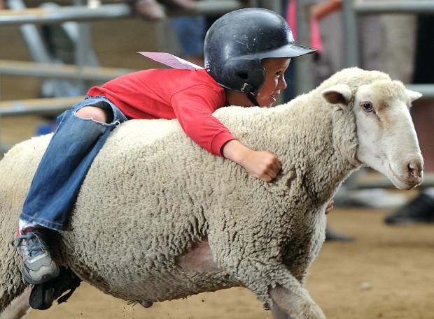 A smiling boy wearing a helmet clings to the back of a sheep which seems suprisingly okay with this